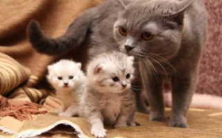 Когда котята начинают видеть после открытия