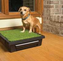 Как приучить собаку к туалету дома