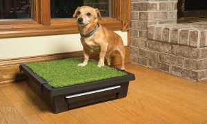 Как приучить домашнюю собаку к туалету