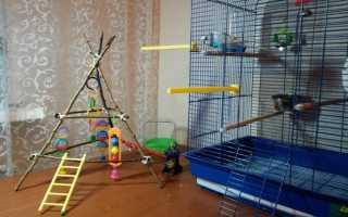 Игровая площадка для волнистого попугая