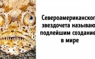 На дне океана с акулами