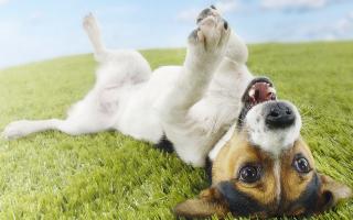 Глистогон для собак