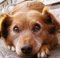 Обезболивающее средство для собак