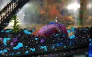 Что делать с умершей рыбкой
