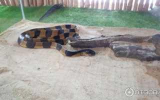 Какие на ощупь змеи