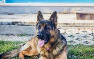 Капли барс для собак инструкция