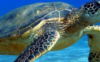 Фото морских черепах