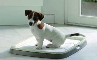 Как приучить комнатную собаку к туалету