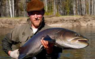Название больших рыб