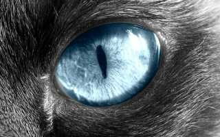 Видимое третье веко у кошек