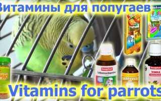 Витамины для волнистых попугайчиков