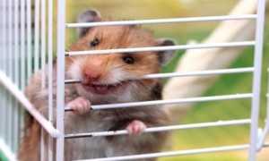 Почему хомяк хочет сбежать из клетки
