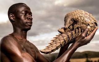 Исчезающие животные мира