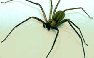 Укус обычного паука