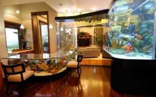 Как содержать рыбок в домашних условиях