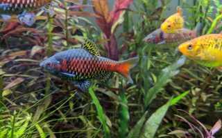 Совместимость рыб в аквариуме таблица