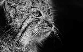 Доклад о исчезающих животных 3 класс
