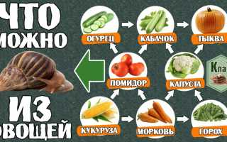 Чем кормить африканских улиток
