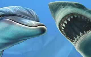 Плавник дельфина и акулы