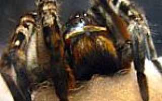 Пауки воронежской области фото и описание