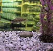 Рыбки для жесткой воды