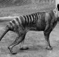 Сообщение о исчезающих видах животных