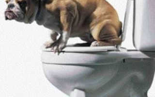 Туалет для собаки кобеля