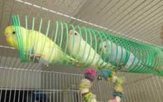 Игрушки для попугаев из дерева