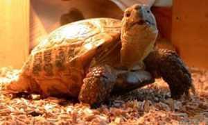 Информация о черепахах