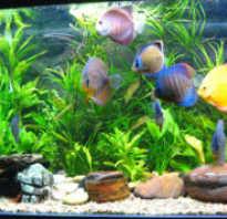 Аквариумные рыбы уход