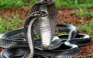Оранжевые змеи фото