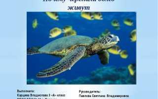 Почему черепахи долго живут