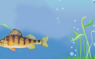 Рыбы спят с открытыми глазами