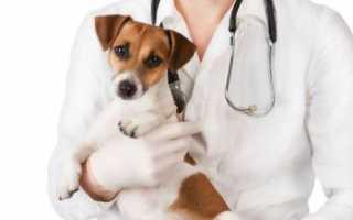 Обезболивающие для собак после кастрации