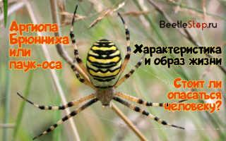 Садовый паук фото