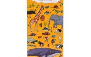 Мир животных книга для детей