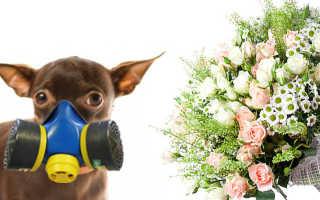 Лекарства от аллергии для собак