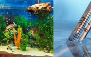 Оптимальная температура воды для красноухих черепах
