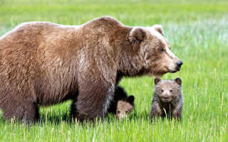 Исчезнувшие животные московской области