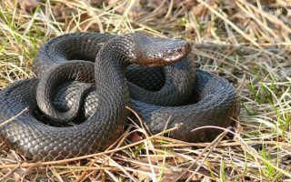 Змеи костромской области