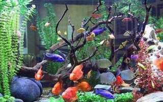 Показать аквариумных рыбок с названием
