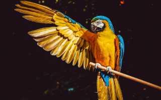 Сколько стоят попугаи ара