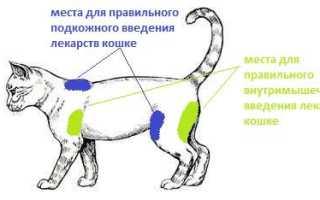 Как делать укол кошке видео
