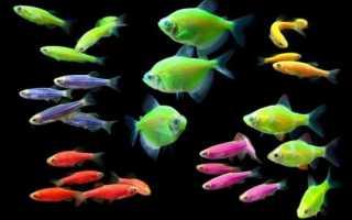 Маленькая светящаяся рыбка
