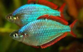 Радужные рыбки фото