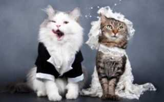 Как происходит вязка котов