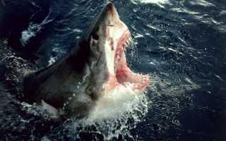 Акула похожая на ската