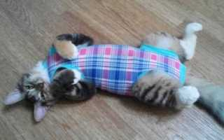 Как завязать бандаж кошке