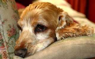 Препараты против глистов для собак