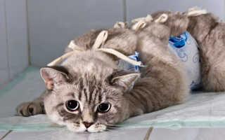 Как завязать попону кошке